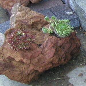 Lava plantesten